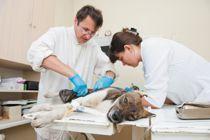 Secrétaire assistante vétérinaire : formation Educatel   Vétérinaire assistante   Scoop.it