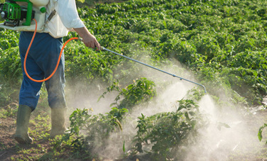 Monsanto Introduces Newest Herbicide-Resistant Crop | Wholesome Food Association | Scoop.it
