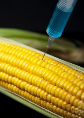 A Scary Side Effect of Eating GMO Foods | Natural Health News | Natural Health Resources | Live in the Now by StopAgingNow.com | Food issues | Scoop.it