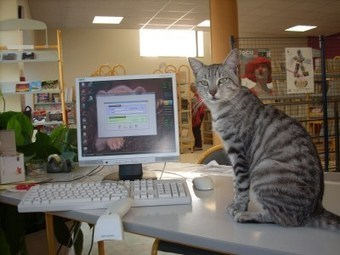 Edwyn présente Chapitre, le chat bibliothécaire | Edwyn, Faiel & Cie | Chats | Scoop.it