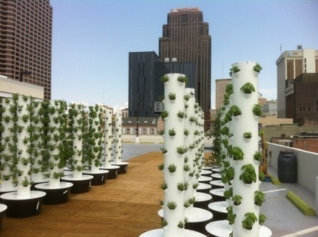 A.M.P.S. and Rouses are taking urban farming to new heights ... | The Barley Mow | Scoop.it