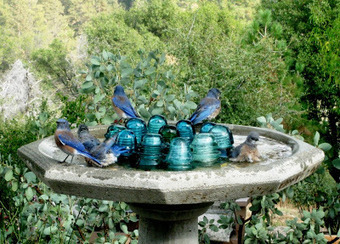 Upcycle glass insulators - in the birdbath! | Upcycled Garden Style | Scoop.it