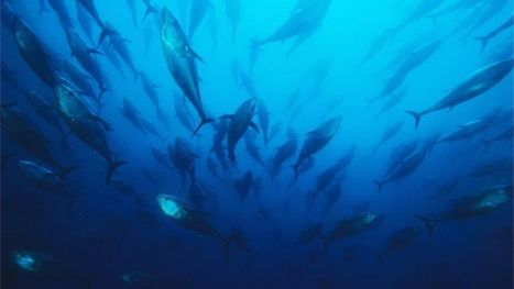 Ocean Fish Population reduced by half  since 1970. Luxury sea-food by 75%. | Oven Fresh | Scoop.it