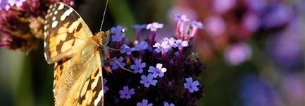 La nature en fête du 21 au 25 mai - Ministère du Développement durable | Scoop'Auvergne | Scoop.it