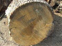La madera: Estructura y propiedades.   carpinteria   Scoop.it