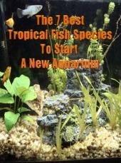 7 Best Beginning Tropical Fish Species For Starting A New Aquarium   Proof Positive   saltwater   Scoop.it