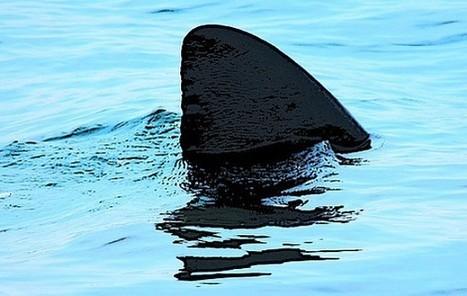 Shark Finning: Appetite for Extinction? | Marine Conservation (Konservasi Laut) | Scoop.it