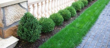 » Blog ArchiveApril Landscaping Q&A »   greengrasslandscape   Scoop.it