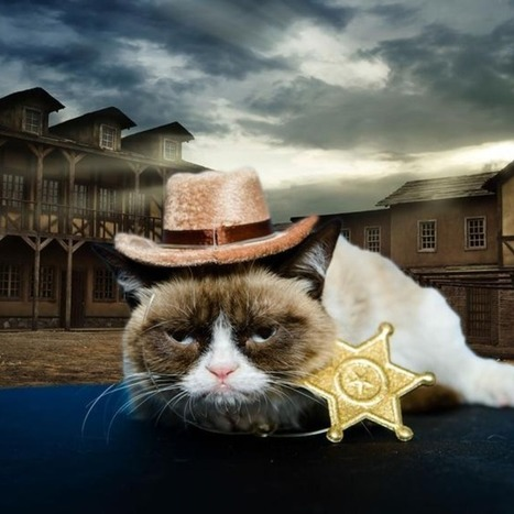 Grumpy Cat Lands a Role in a Hollywood Movie, Stays Unimpressed | Social Media News | Scoop.it