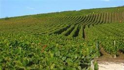 La plantation des vignes - une menace pour les pandas?  Agrisalon   Le Vin et + encore   Scoop.it