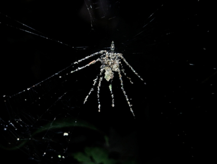 A Spider Builds Fake Spiders To Psych Out Predators | Quite Interesting News | Scoop.it