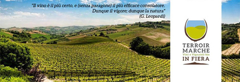 Terroir Marche: a new wine fair celebrating organic and biodynamic Le Marche wines | Wines and People | Scoop.it