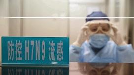 Flu symptoms 2013: Chinese bird flu is resistant to drugs | Flu symptoms 2013: Treatment of flu! Flu epidemic prevention! | Scoop.it