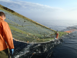 Call for investment in new fishing net technology | Aquaculture Directory | Aquaculture Directory | Scoop.it