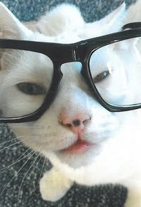 Cat Survives 19-Story Fall -- Zootoo Pet News | Pet News | Scoop.it