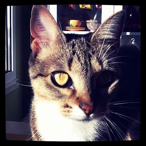 Cat behavior - Wikipedia, the free encyclopedia | Cat Stuff | Scoop.it