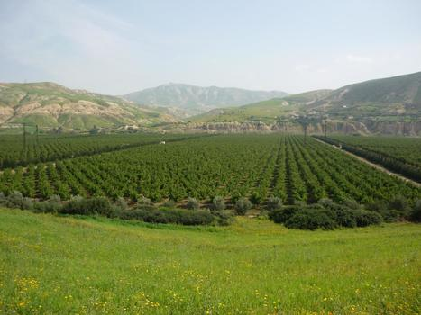L'agrégation agricole, outil stratégique du Plan Maroc Vert - La Nouvelle Tribune | Agriculture et Alimentation méditerranéenne durable | Scoop.it