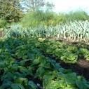 Samentuin Roosekapelleveld: een tuin om samen ecologisch te ...   Velt - Ecologisch leven en tuinieren   Scoop.it