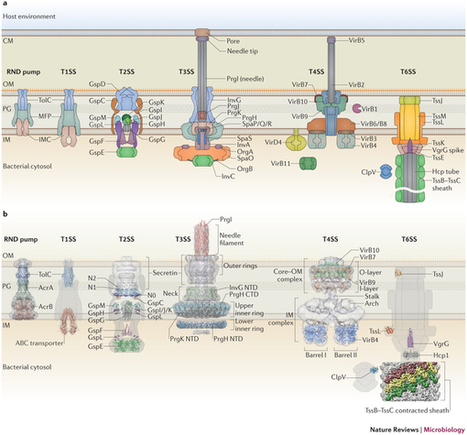 Secretion systems in Gram-negative bacteria: structural and mechanistic insights : Nature Reviews Microbiology : Nature Publishing Group | Plant-Microbe Interaction | Scoop.it