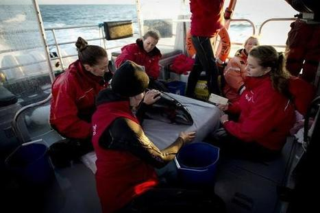 Porpoise found near death months ago is released to wild off BC's coast - Vancouver Sun | Intrepid #Cove #Guardian @ManiNeptune | Scoop.it