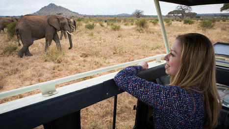 Clinton Foundation   Up Close: How We Can End The Elephant Poaching Crisis   Kruger & African Wildlife   Scoop.it