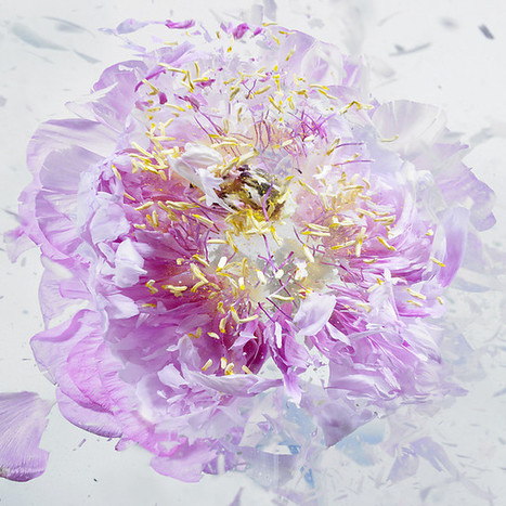 High Speed Flower Explosions by Martin Klimas | Colossal | Visual art | Scoop.it