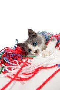 5 Reasons Your Indoor Cat Needs Pet Insurance | Pet Health Tips | Scoop.it