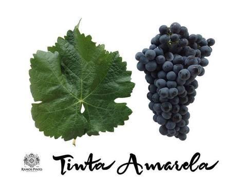 Portuguese Red Grape named Yellow! | Wine Liquid Lisbon | Scoop.it