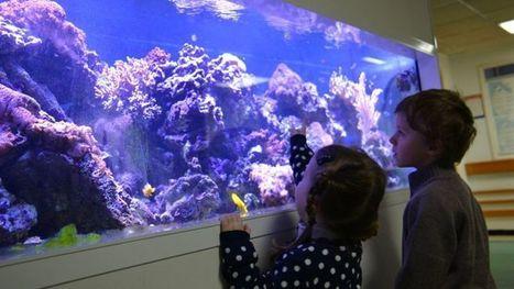 Les incroyables bienfaits des aquariums dans les hôpitaux | Bien-être Santé Qualité de vie | Scoop.it