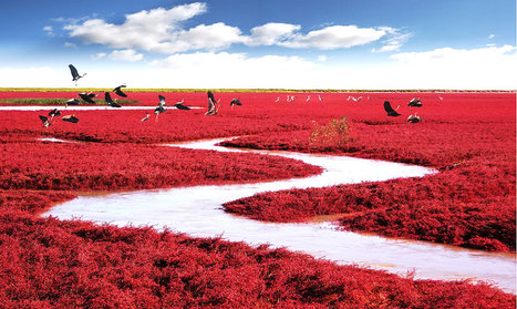 Red Beach, Panjin, China | LOVELY | Scoop.it