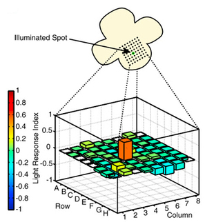 Newly developed chemical restores light perception in blind mice   Conciencia Colectiva   Scoop.it