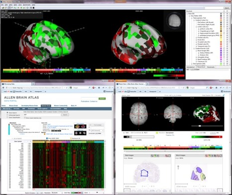 The Human Brain Online: An Open Resource for Advancing Brain Research | DigitAG& journal | Scoop.it