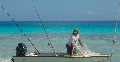"""Polynésie : Rapa gère la surpêche avec le """"rāhui"""" traditionnel   EnezGreen   Tourisme insulaire durable   Scoop.it"""