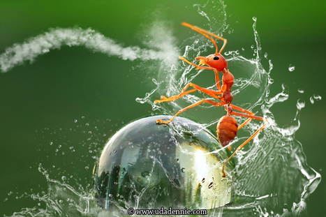 spectacular macro photography examples | PhotoInk | For the love of Photography | Scoop.it