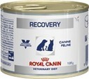 Recovery Cats/Dogs | Royal Canin | Donaciones | Scoop.it