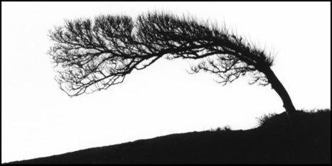 L'arbre et le photographe à la galerie des Beaux-arts à Paris | Revue de Web par ClC | Scoop.it