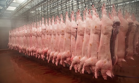 Industrial farming is one of the worst crimes in history | You are what you eat! | Scoop.it