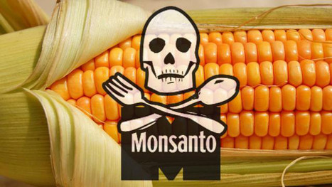 Monsanto Protection Act Dropped from Senate Funding Bill | Green Living | Scoop.it