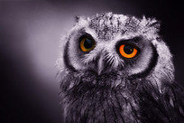 night owl | Idiom Weekly | Scoop.it