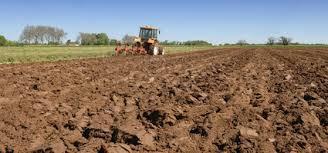 Travail ou non travail du sol ? Question pour une agriculture plus durable | Les colocs du jardin | Scoop.it