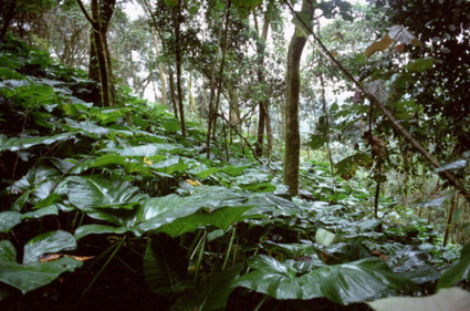 Protected areas: biodiversity troves and carbon sinks under one canopy?   GarryRogers Biosphere News   Scoop.it