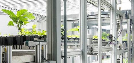 Première française : FUL inaugure son prototype de site industriel de production végétale en milieu urbain | Chimie verte et agroécologie | Scoop.it