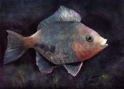 Tropical rainbow fish, print, card 50% off | Good stuff to get | Scoop.it