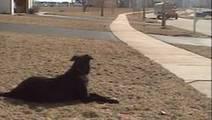 Tous les jours, ce chien attend la même chose. Mais de quoi s'agit-il ? | CaniCatNews-actualité | Scoop.it