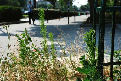 Zones refuges pour la biodiversité en ville | Le flux d'Infogreen.lu | Scoop.it