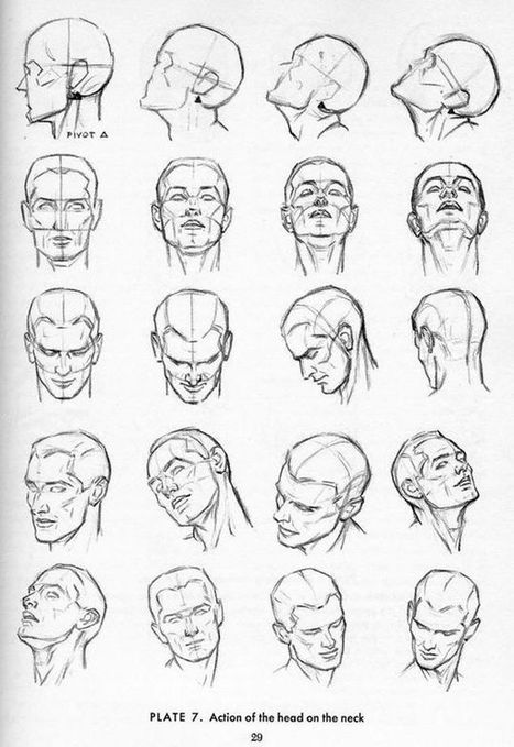 Drawing References For Beginners Head Drawing Reference Guide