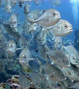 Island surveys show effects of human populations on reef fish | Biologia 4, lukio | Scoop.it