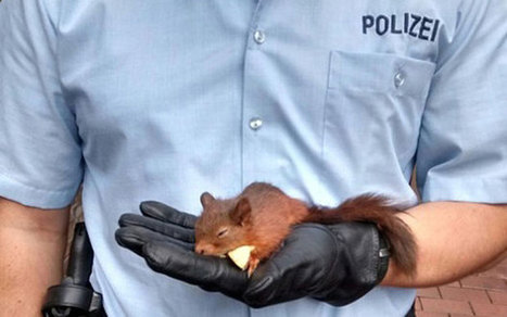 German squirrel arrested after woman complained it was stalking her | Angelika's German Magazine | Scoop.it
