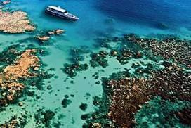 UN plans to list reef as endangered   ambiente   Scoop.it