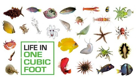 Biocubes: Life In One Cubic Foot | Smithsonian Ocean Portal | Into the Driver's Seat | Scoop.it